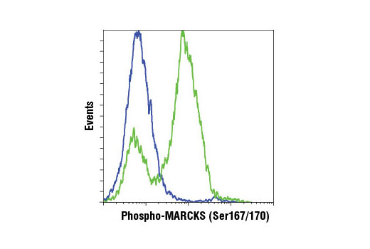 Flow cytometric analysis of HeLa cells, serum starved (blue) or serum starved and treated with TPA #4174 (200nM, 15 min; green), using Phospho-MARCKS (Ser167/170) (D13E4) XP® Rabbit mAb. Anti-rabbit IgG (H+L), F(ab')<sub>2</sub> Fragment (Alexa Fluor® 647 Conjugate) #4414 was used as a secondary Ab.