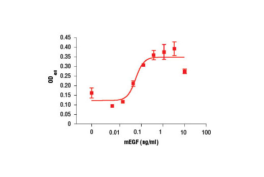 The proliferation of NIH/3T3 cells treated with increasing concentrations of mEGF was assessed. After 24 hr treatment, cells were labeled with BrdU for 4 hr. BrdU incorporation was determined using the BrdU Cell Proliferation Assay Kit #6813 and the OD<sub>450 </sub>was determined.