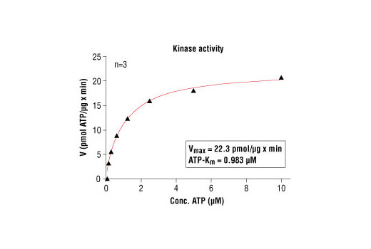 Image 5: HTScan® PKCζ Kinase Assay Kit