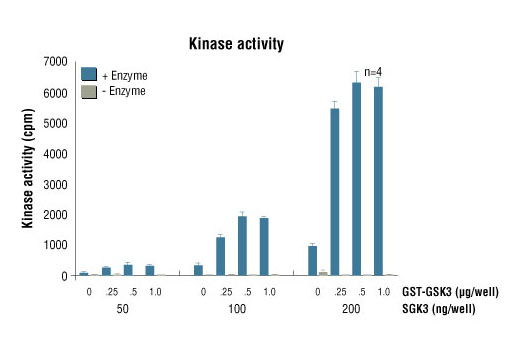 Image 5: HTScan® SGK3 Kinase Assay Kit