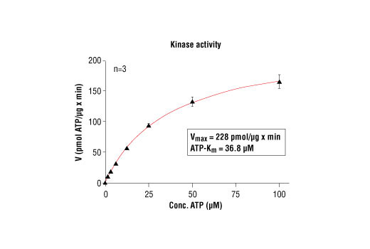 Image 5: HTScan® PAK2 Kinase Assay Kit
