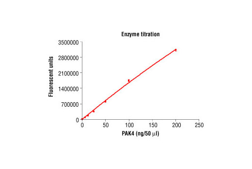 Image 1: HTScan® PAK4 Kinase Assay Kit