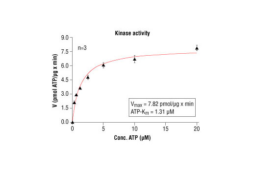 Image 5: HTScan® PAK4 Kinase Assay Kit