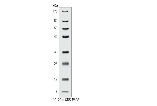Image 1: Prestained Protein Marker, Broad Range (Premixed Format)