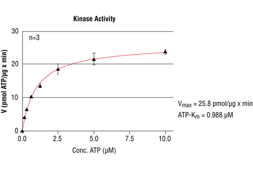 Image 5: HTScan® HER4/ErbB4 Kinase Assay Kit