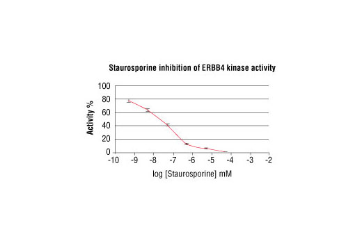 Image 2: HTScan® HER4/ErbB4 Kinase Assay Kit