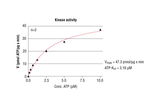 Image 5: HTScan® FGF Receptor 4 Kinase Assay Kit