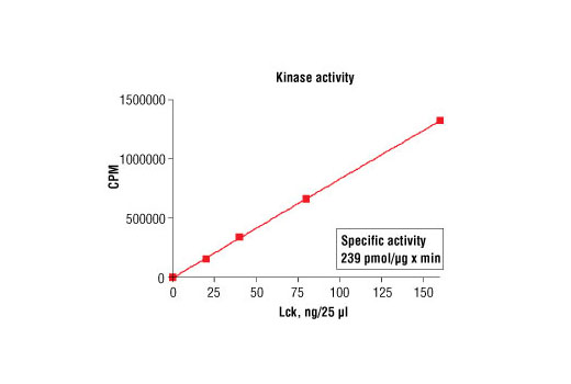 Image 5: HTScan® Lck Kinase Assay Kit