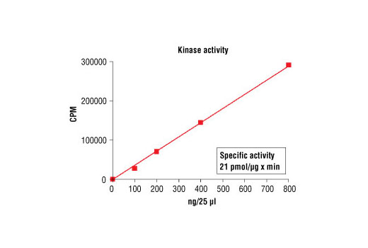 Image 5: HTScan® PDGF Receptor β Kinase Assay Kit