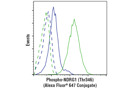 Flow cytometric analysis of Jurkat cells, untreated (green) or treated with LY294002 #9901 (50 uM, 2 hr), Wortmanin #9951 (1 uM, 2 hr) and U0126 #9903 (10 uM, 2 hr) (blue), using Phospho-NDRG1 (Thr346) (D98G11) XP® Rabbit mAb (Alexa Fluor® 647 Conjugate) (solid lines) or concentration-matched Rabbit (DA1E) mAb IgG XP<sup>®</sup> Isotype Control (Alexa Fluor<sup>®</sup> 647 Conjugate) #2985 (dashed lines).
