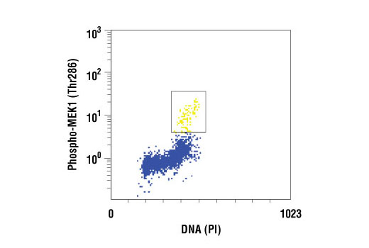Flow cytometric analysis of untreated Jurkat cells, using Phospho-MEK1 (Thr286) Antibody versus propidium iodide (DNA content). The box indicates Phosho-MEK1 positive cells.