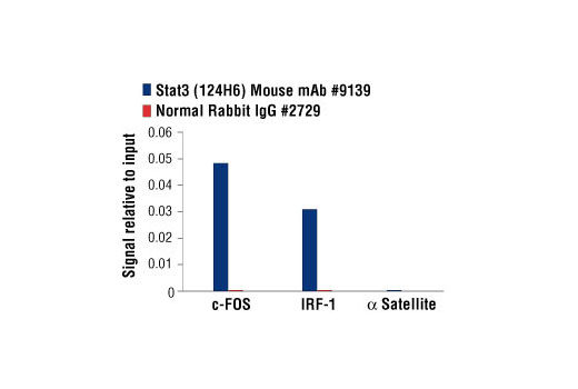 Chromatin immunoprecipitations were performed with cross-linked chromatin from Hep G2 cells starved overnight and treated with IL-6 (100 ng/ml) for 30 minutes, and either Stat3 (124H6) Mouse mAb or Normal Rabbit IgG #2729 using SimpleChIP<sup>®</sup> Enzymatic Chromatin IP Kit (Magnetic Beads) #9003. The enriched DNA was quantified by real-time PCR using human IRF-1 promoter primers, SimpleChIP<sup>®</sup> Human c-Fos Promoter Primers #4663, and SimpleChIP<sup>®</sup> Human α Satellite Repeat Primers #4486. The amount of immunoprecipitated DNA in each sample is represented as signal relative to the total amount of input chromatin, which is equivalent to one.
