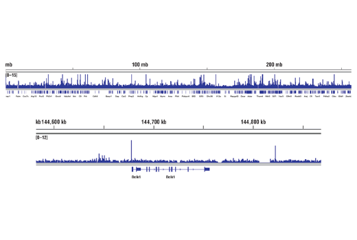 Image 13: Wnt/β-Catenin Activated Targets Antibody Sampler Kit