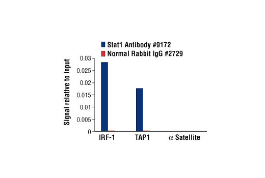 Chromatin immunoprecipitations were performed with cross-linked chromatin from HT-1080 cells treated with IFN-γ (50 ng/ml) for 30 minutes and either Stat1 Antibody or Normal Rabbit IgG #2729 using SimpleChIP<sup>®</sup> Enzymatic Chromatin IP Kit (Magnetic Beads) #9003. The enriched DNA was quantified by real-time PCR using human IRF-1 promoter primers, SimpleChIP<sup>®</sup> Human TAP1 Promoter Primers #5148, and SimpleChIP<sup>®</sup> Human α Satellite Repeat Primers #4486. The amount of immunoprecipitated DNA in each sample is represented as signal relative to the total amount of input chromatin, which is equivalent to one.