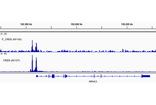 Chromatin IP-seq Image 1