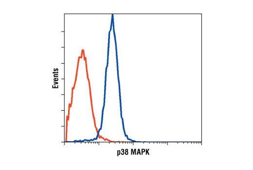Flow cytometric analysis of Jurkat cells, using p38 MAPK Antibody (blue) compared to a nonspecific negative control antibody (red).
