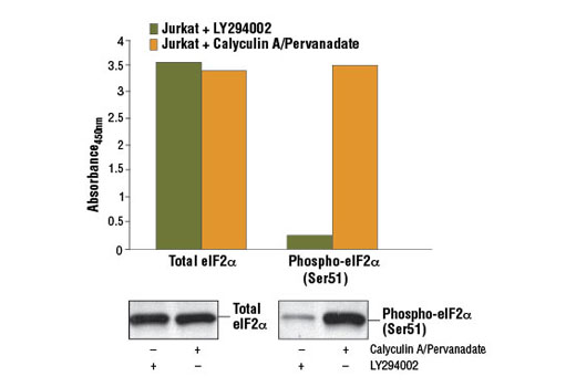ELISA - Western correlation Image Product Gallery Navigation2 - PathScan® Phospho-eIF2α (Ser51) Sandwich ELISA Kit