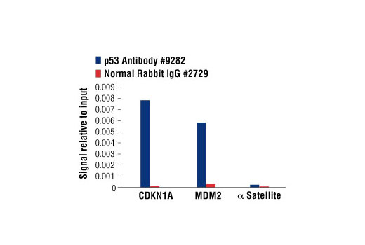 Chromatin Immunoprecipitation Image 1: p53 Antibody