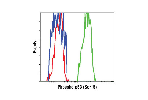Flow cytometric analysis of HT-29 cells, untreated (blue) or UV-treated (green), using Phospho-p53 (Ser15) (16G8) Mouse mAb compared to a nonspecific negative control antibody (red).