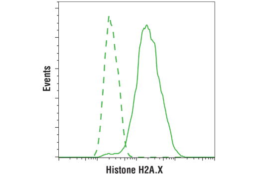 Flow cytometric analysis of MCF7 cells (green) using Histone H2A.X (D17A3) XP® Rabbit mAb (solid lines) or a concentration matched Rabbit (DA1E) mAb IgG XP<sup>®</sup> Isotype Control #3900 (dashed lines). Anti-rabbit IgG (H+L), F(ab')<sub>2</sub> Fragment (Alexa Fluor<sup>®</sup> 488 Conjugate) #4412 was used as a secondary antibody.