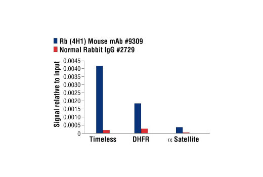 Chromatin Immunoprecipitation Image 1: Rb (4H1) Mouse mAb
