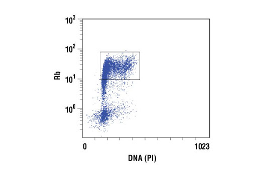 Flow cytometric analysis of Jurkat cells, using Rb (4H1) Mouse mAb versus propidium iodide (DNA content). The box indicates Rb positive cells.