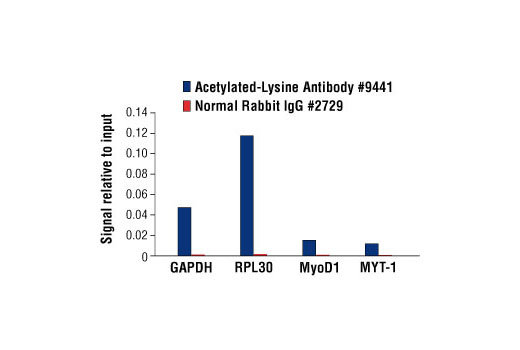 Chromatin Immunoprecipitation Image 1: Acetylated-Lysine Antibody