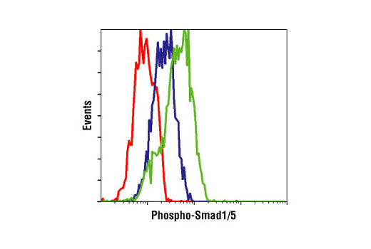 Flow cytometric analysis of HeLa cells, untreated (blue) or BMP-treated (green), using Phospho-Smad1/5 (Ser463/465) (41D10) Rabbit mAb compared to a nonspecific negative control antibody (red).