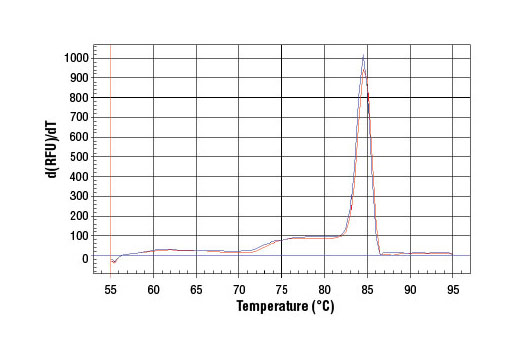 PCR product melting curves were obtained for real-time PCR reactions performed using SimpleChIP<sup>®</sup> Human CDKN1A Promoter Primers. Data is shown for both duplicate PCR reactions using 20 ng of total DNA. The melt curve consists of 80 melt cycles, starting at 55°C with increments of 0.5°C per cycle. Each peak is formed from the degradation of a single PCR product.