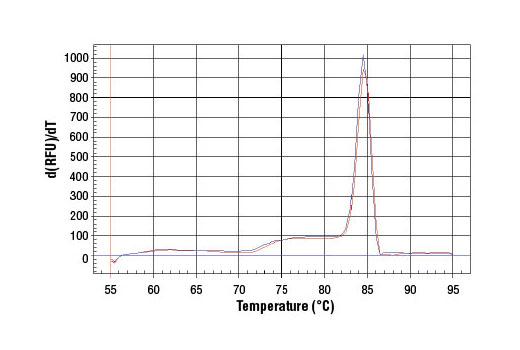 Primer Set - SimpleChIP® Human CDKN1A Promoter Primers - Chromatin IP, UniProt ID P38936, Entrez ID 1026 #6449, Chromatin Ip