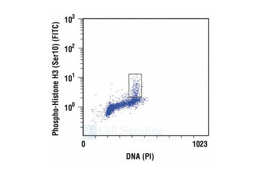 Flow Cytometry Image 1: Phospho-Histone H3 (Ser10) Antibody