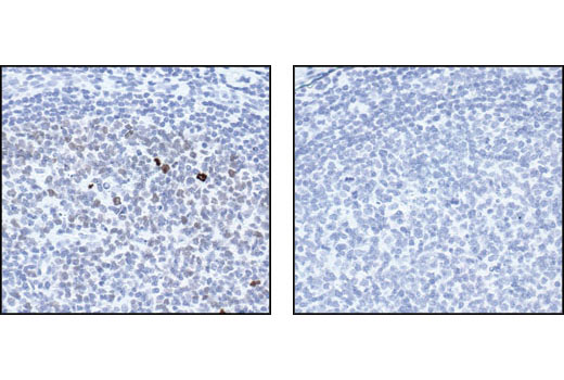 Polyclonal Antibody - Phospho-Histone H3 (Thr3) Antibody, UniProt ID P68431, Entrez ID 8350 #9714, Chromatin Regulation / Acetylation