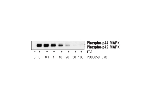 Chemical Modulators - PD98059 #9900