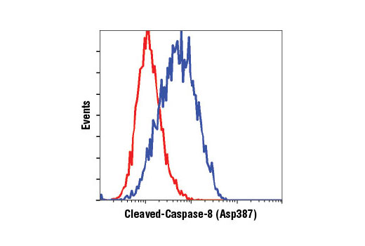 Flow cytometric analysis of CTLL-2 cells, untreated (red) or treated with cyclohexamide and hTNF-α #8902 (blue), using Cleaved Caspase-8 (Asp387) (D5B2) XP<sup>®</sup> Rabbit mAb (Mouse Specific).