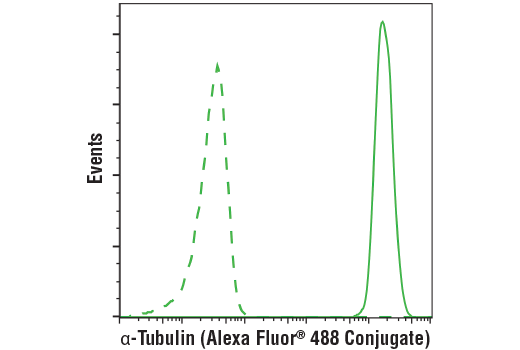 Flow cytometric analysis of Jurkat cells using α-Tubulin (DM1A) Mouse mAb (Alexa Fluor® 488 Conjugate) (solid line) compared to concentration-matched Mouse (MOPC-21) mAb IgG1 Isotype Control (Alexa Fluor® 488 Conjugate) #4878 (dashed line).
