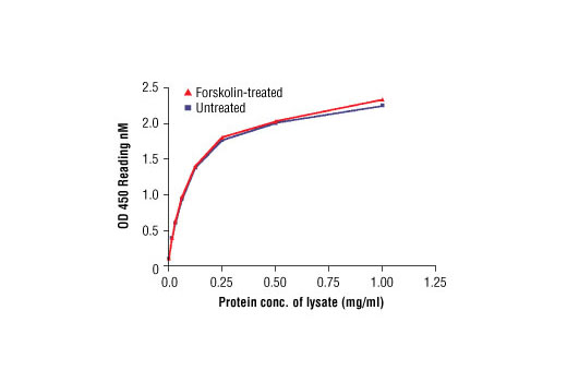Figure 2: The relationship between protein concentration of lysates from untreated and Forskolin treated COS cells and kit assay optical density readings is shown. COS cells were treated with Forskolin #3828 (50 µM) for 30 min at 37°C, and then lysed.