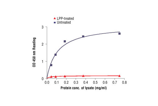Figure 2: The relationship between protein concentration of untreated and LPP-treated Calu-3 cell lysates (see the legend of Figure 1) and kit assay optical density readings.