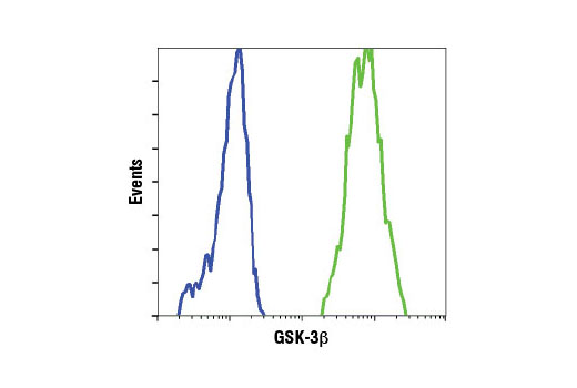 Flow cytometric analysis of wild-type mouse embryonic fibroblasts (MEFs) (green) and GSK-3β (-/-) MEFs (blue) using GSK-3β (3D10) Mouse mAb. (MEF wild type and GSK-3β (-/-) cells were kindly provided by Dr. Jim Woodgett, University of Toronto, Canada).