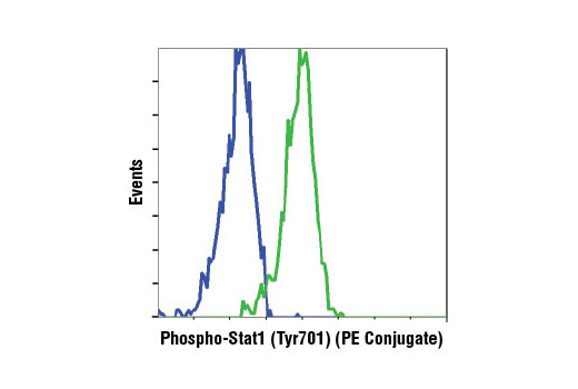 Flow cytometric analysis of Jurkat cells, untreated (blue) or treated with hIFN-α1 #8927 (green), using Phospho-Stat1 (Tyr701) (58D6) Rabbit mAb (PE Conjugate).