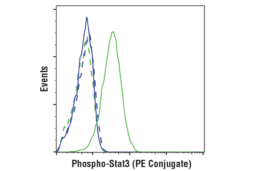Flow cytometric analysis of Jurkat cells, untreated (blue) or treated with IFN-alpha (100 ng/ml, 30 min; green) using Phospho-Stat3 (Tyr705) (D3A7) XP® Rabbit mAb (PE Conjugate) (solid lines) or concentration-matched Rabbit (DA1E) mAb IgG XP<sup>®</sup> Isotype Control (PE Conjugate) #5742 (dashed lines).