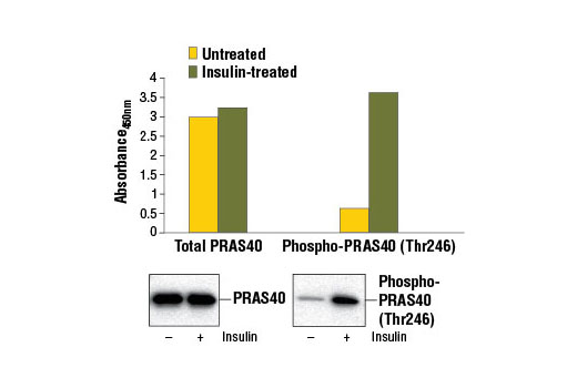 Figure 1. Treatment of HeLa cells with insulin stimulates phosphorylation of PRAS40 at Thr246, detected by the PathScan<sup>®</sup> Phospho-PRAS40 (Thr246) Sandwich ELISA Kit, but does not affect the levels of total PRAS40 detected by PathScan<sup>®</sup> Total PRAS40 Sandwich ELISA Kit #7331. HeLa cells (80-90% confluent) were treated with 1.7 μM insulin<sub> </sub>for 15 minutes and lysed. The absorbance readings at 450 nm are shown in the top figure, while the corresponding western blots using PRAS40 (D23C7) XP<sup>®</sup> Rabbit mAb #2691 (left panel) or Phospho-PRAS40 (Thr246) (C77D7) Rabbit mAb #2997 (right panel) are shown in the bottom figure.