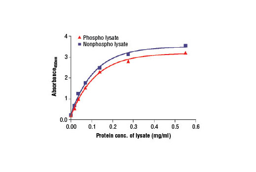 Figure 2. The relationship between protein concentration of phospho or nonphospho lysates and the absorbance at 450 nm is shown. KATO III cells were cultured (85% confluence) and lysed with or without the addition of phosphatase inhibitors to the lysis buffer (phospho or nonphospho lysate, respectively).