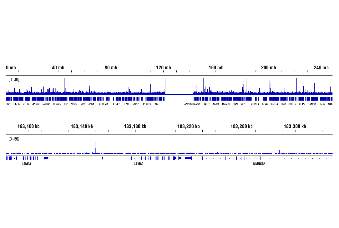 Image 2: NF-κB p65 (D14E12) XP® Rabbit mAb