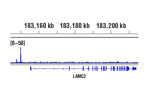 Image 1: NF-κB Family Antibody Sampler Kit II