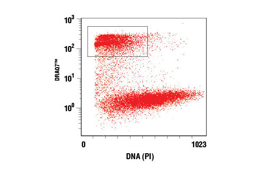 Flow cytometric analysis of live Jurkat cells treated with Staurosporine #9953. Gated population represents DRAQ7™-positive apoptotic cells.