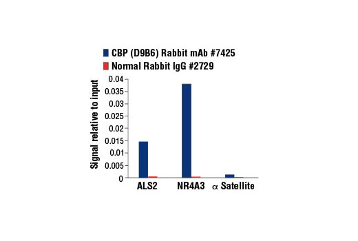 Chromatin immunoprecipitations were performed with cross-linked chromatin from 293 cells, treated with Forskolin #3828 (30 μM) for 1h, and either CBP (D9B6) Rabbit mAb or Normal Rabbit IgG #2729, using SimpleChIP<sup>®</sup> Enzymatic Chromatin IP Kit (Magnetic Beads) #9003. The enriched DNA was quantified by real-time PCR using human ALS2 exon 1 primers, SimpleChIP<sup>®</sup> Human NR4A3 Promoter Primers #4829, and SimpleChIP<sup>®</sup> Human α Satellite Repeat Primers #4486. The amount of immunoprecipitated DNA in each sample is represented as signal relative to the total amount of input chromatin, which is equivalent to one.