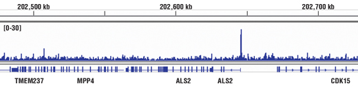 Chromatin immunoprecipitations were performed with cross-linked chromatin from HCT116 cells and CBP (D9B6) Rabbit mAb, using SimpleChIP<sup>®</sup> Enzymatic Chromatin IP Kit (Magnetic Beads) #9003. DNA Libraries were prepared using SimpleChIP<sup>®</sup> ChIP-seq DNA Library Prep Kit for Illumina<sup>®</sup> #56795. The figure shows binding across ALS2, a known target gene of CBP (see additional figure containing ChIP-qPCR data). For additional ChIP-seq tracks, please download the product data sheet.