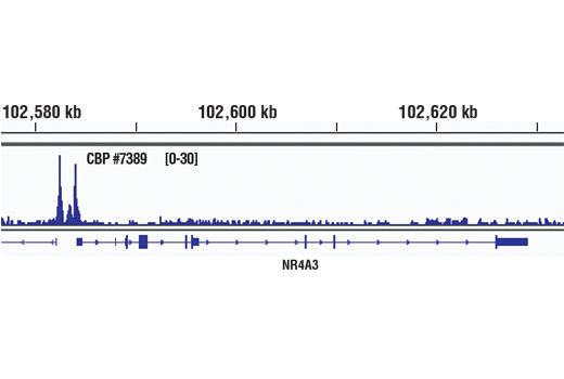 Chromatin IP-seq