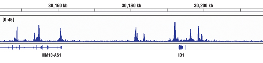 Chromatin immunoprecipitations were performed with cross-linked chromatin from HaCaT cells treated with hTGF-β3 #8425 (7 ng/ml, 1 hr) and Smad2/3 (D7G7) XP<sup>®</sup> Rabbit mAb, using SimpleChIP<sup>®</sup> Enzymatic Chromatin IP Kit (Magnetic Beads) #9003. DNA Libraries were prepared using SimpleChIP<sup>®</sup> ChIP-seq DNA Library Prep Kit for Illumina<sup>®</sup> #56795. The figure shows binding across ID1, a known target gene of Smad2/3 (see additional figure containing ChIP-qPCR data). For additional ChIP-seq tracks, please download the product data sheet.