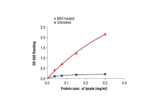 Figure 2. The relationship between protein concentration of lysates from untreated and NGF-treated 3T3/TrkA cells and kit assay optical density readings is shown. After starvation, 3T3/TrkA cells (85% confluence) were treated with NGF (100 ng/ml) for 2 min at 37°C, and then lysed.